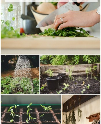 How to Grow Harvest Dry and Store Herbs